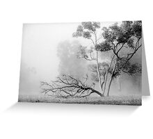Misty Paddock Greeting Card