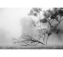 Misty Paddock Photographic Print