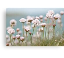St. Ives Thrift Canvas Print