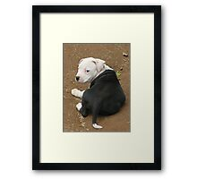What Are You Looking At ? Framed Print