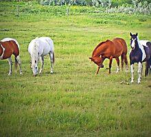 Horse Pals by Al Bourassa