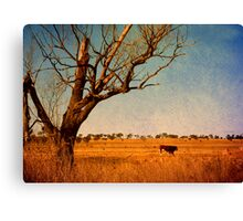 Cattle Country - Uralla, Northern Tablelands, NSW, Australia Canvas Print