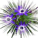 Blue Daisy.......... by lynn carter
