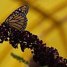 Butterfly house 2.  by JenniferJW