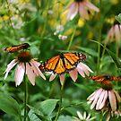 Butterfly house 3 by JenniferJW