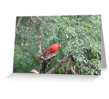 Mr and Mrs Cardinal.. on a very early  rainy morning....  Greeting Card