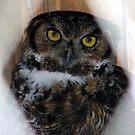 OWL by Len Bomba