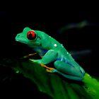 Green  by Anne Smyth