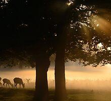 Grazing in the Mist by Kasia Nowak