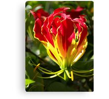 Flame Lily Canvas Print