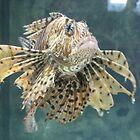lionfish by cherylsnake