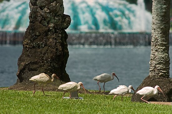 Lake Eola Ibis by Larry  Grayam