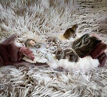 solace by Rachel Davison
