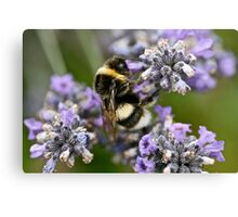 Bumble Beeeeeeeeee Canvas Print