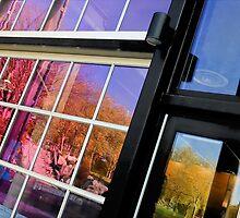 Windows by Tim Poitevin