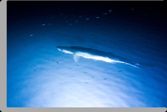 Night Fish by Karen Millard