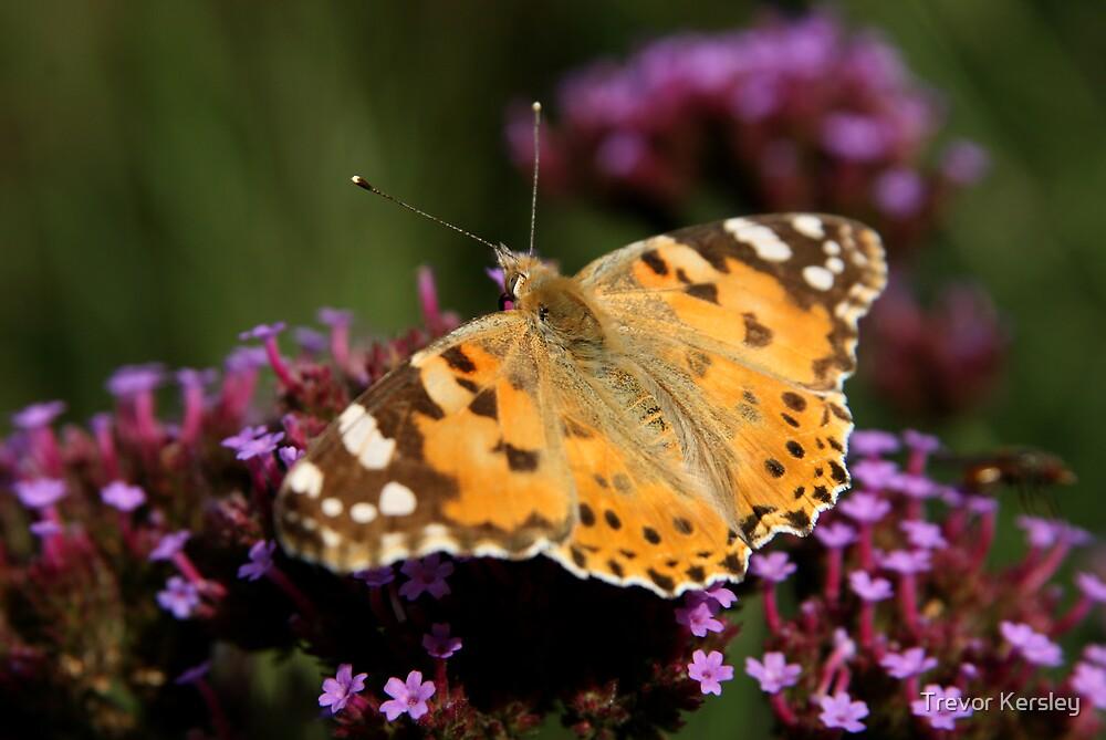 Butterfly #2 by Trevor Kersley