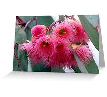 Flower of the Box Ironbark Eucalypt Tree Greeting Card