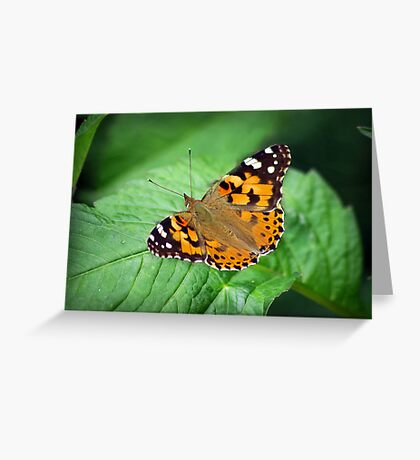 The Soft Touch Greeting Card