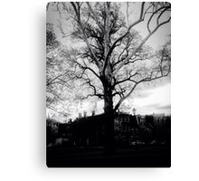 Black and white Majestic tree in the park  Canvas Print