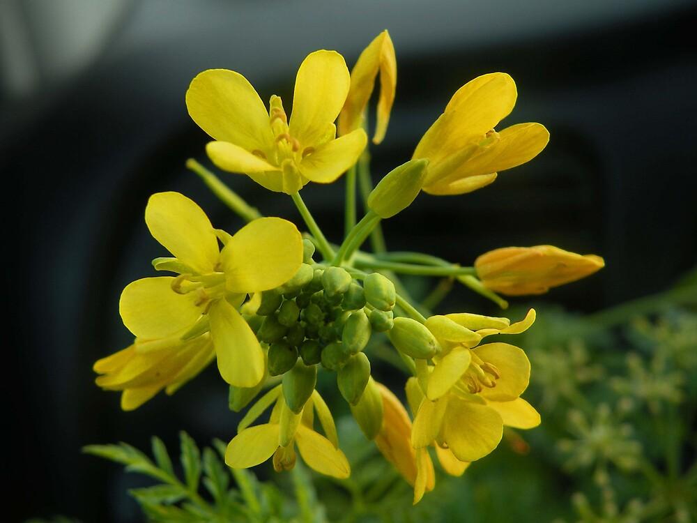 Una Flor  by cieloverde