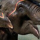 Elephant Bath, Nepal by Darren Newbery