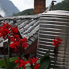 Mountain Flower by Leonie Harris