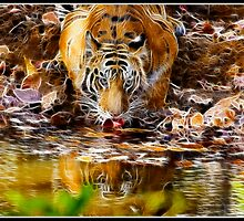 Tiger at Bandhavgarh  by Shaun Whiteman