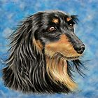 &#x27;Marcus&#x27; - Long Haired Dachshund  by Michelle Wrighton