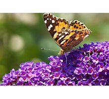Summer in my garden Photographic Print