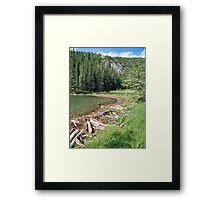 Nature's Engineers Framed Print