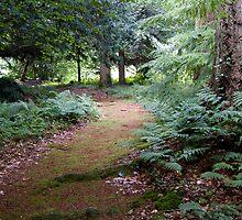Woodland Walk by Sandra Mangnall