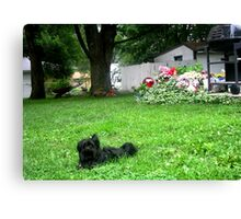 Poochie In the Yard Canvas Print