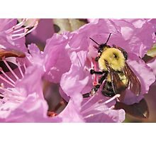 Bumble Bee Wings Photographic Print