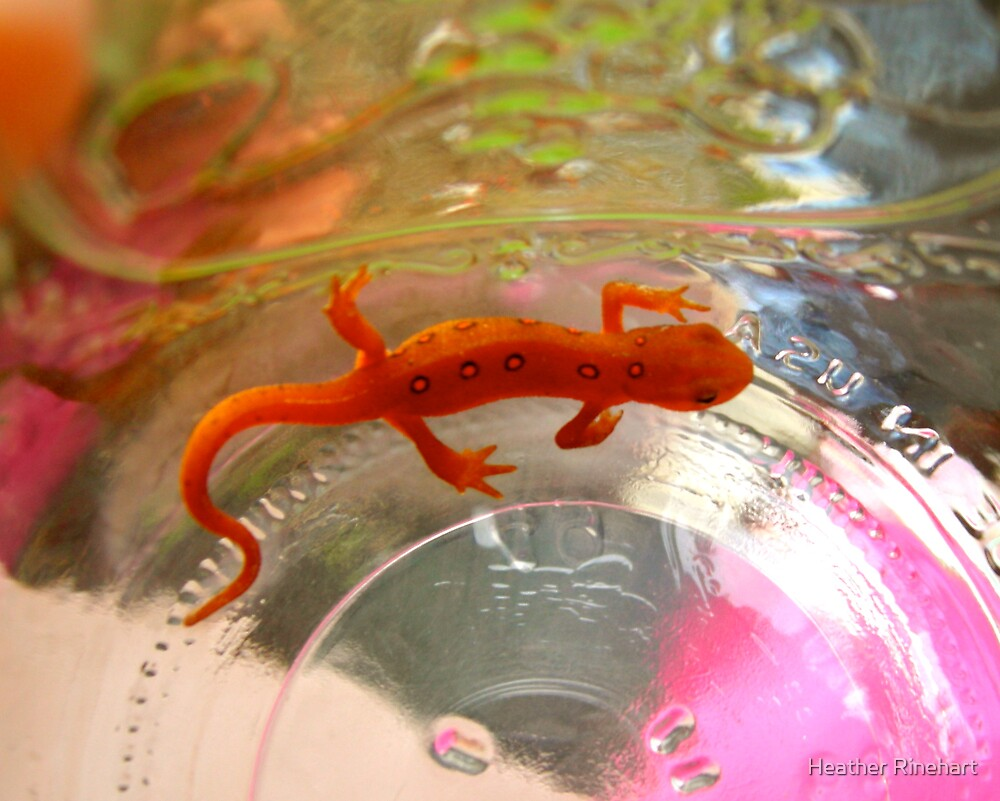 Minute Newt by Heather Rinehart