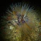 Mediterranean Sea Life by DiveDJ