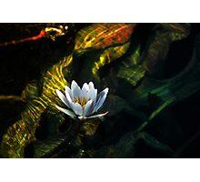 Okavango Lily Photographic Print