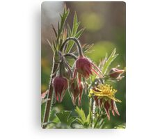 Plants and Flowers Canvas Print