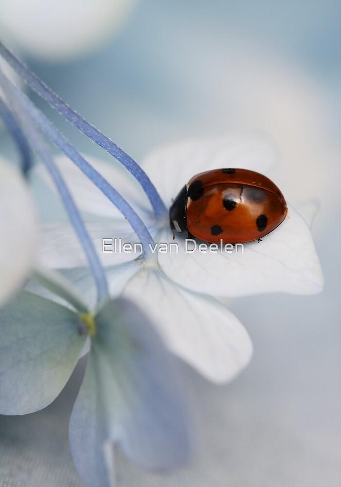 Ladybug on hydrangea. by Ellen van Deelen