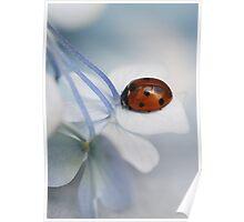 Ladybug on hydrangea. Poster