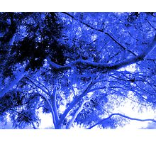 A Canopy of Curvilinear Branches and Beautiful Foliage in Electric Blue Photographic Print
