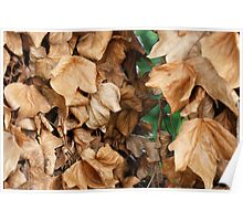 Screen of leaves Poster