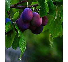 Showering Plums Photographic Print