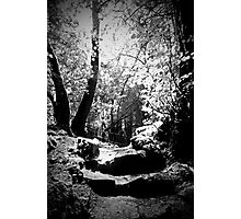 Puzzle Wood Photographic Print