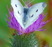 Spreading my wings  by Ciara(Kevin & Paula) Neupert