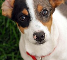 Panini the Puppy  by Ryan Houston