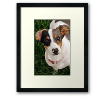Panini the Puppy  Framed Print