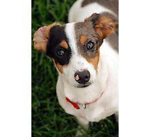 Panini the Puppy  Photographic Print