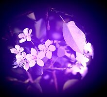 The dream of blossoms by Tanja Katharina Klesse