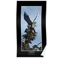 X-Wing (Bald Eagle) Poster